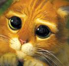 Petit chat innocent, pauvre illustration victime d'un billet sur le Racheumeuneu