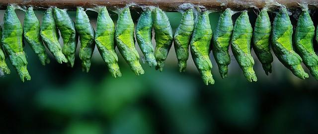 Cocon sémantique : la formation SEO